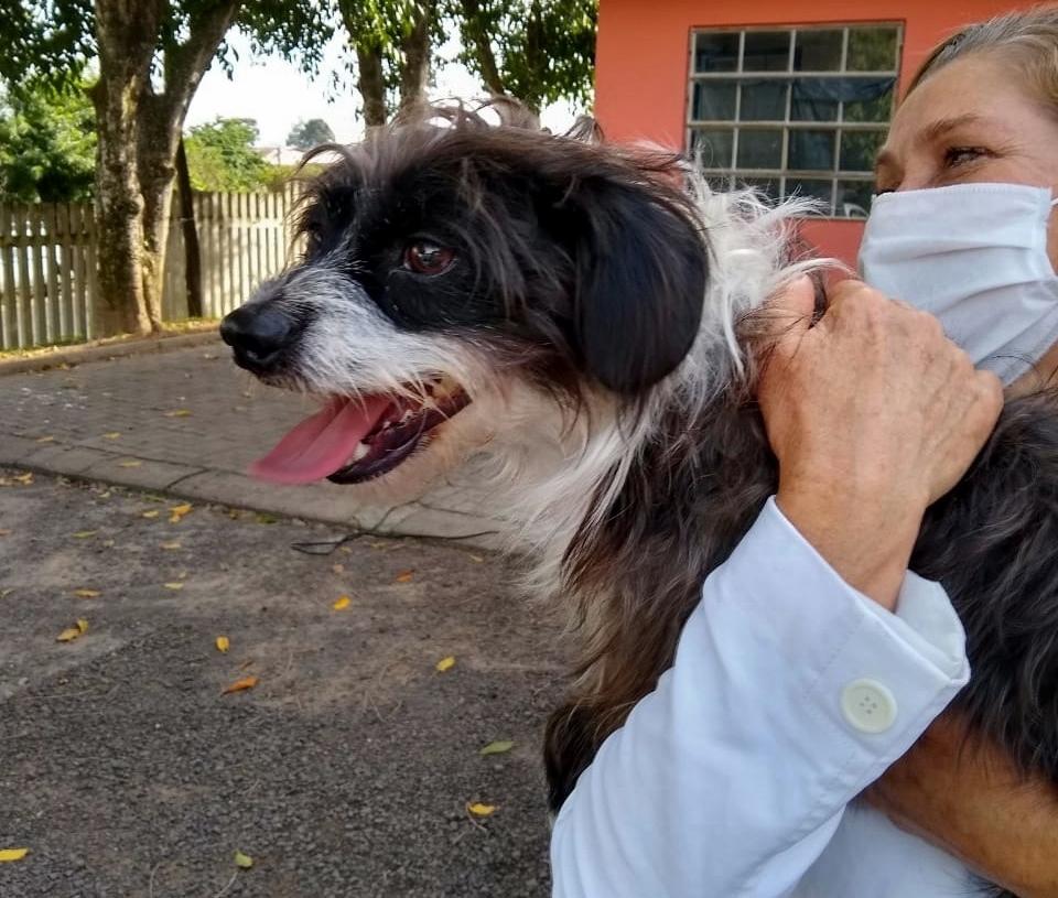 Na primeira ação do Castramóvel no bairro Empresa foram realizados procedimentos apenas nos animais já cadastrados Foto: Secretaria Municipal de Meio Ambiente