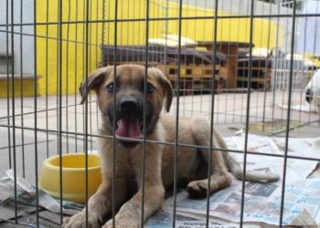 O atendimento no município é específico para animais de rua, sem nenhum suporte Foto: Matheus de Oliveira