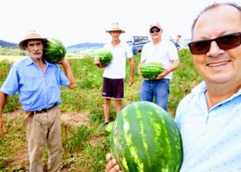 Foto: Divulgação/Secretaria de Desenv. Agricultura e Pecuária