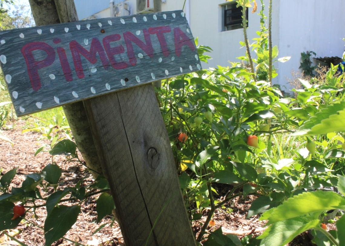 Plantio e colheita são realizados pelos moradores junto com os agentes de saúde e a nutricionista Marília  Fotos: Lilian Moraes
