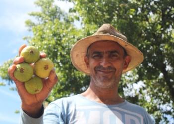Qualidade da fruta é a paluma, comprada por três grandes empresas do ramo alimentício  Foto: Lilian Moraes