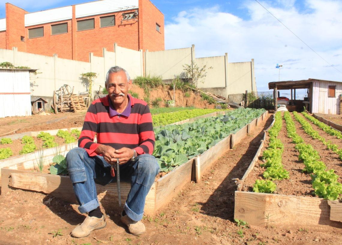 Preparo da terra e cultivo é responsabilidade do aposentado Pica-Pau Fotos: Lilian Moraes